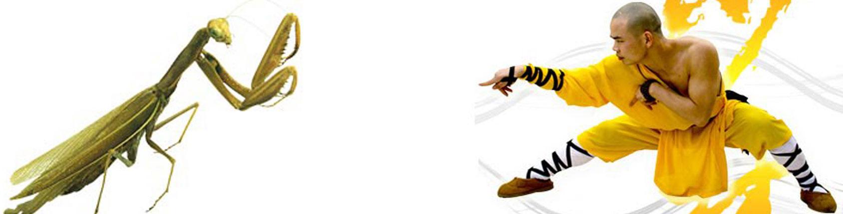 Resultado de imagem para Kung Fu louva a deus